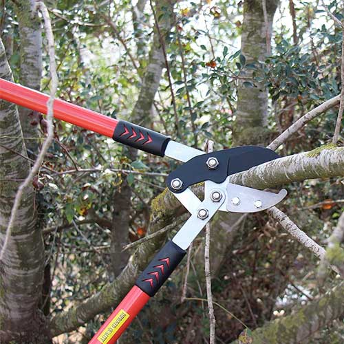 10 Best Tree Trimming Tools