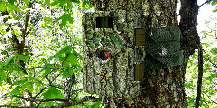 10 Best Trail Cameras Reviews & Buyer's Guide